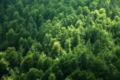 Alberi in foresta fotografie stock libere da diritti