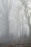 Alberi in foresta nebbiosa Immagine Stock