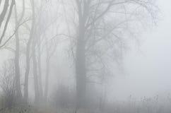 Alberi in foresta nebbiosa Fotografie Stock