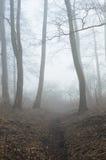 Alberi in foresta nebbiosa Fotografia Stock