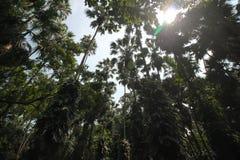 Alberi forestali Fotografia Stock