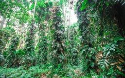 Alberi forestali Immagine Stock
