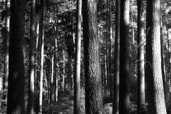 Alberi forestali Fotografie Stock