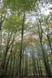 Alberi forestali alti fotografia stock libera da diritti