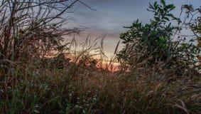 Alberi forestali Ambiti di provenienza di legno verdi di luce solare della natura Fotografia Stock
