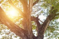Alberi forestali Ambiti di provenienza di legno verdi di luce solare della natura Fotografie Stock