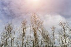 Alberi forestali Ambiti di provenienza di legno verdi di luce solare della natura Fotografia Stock Libera da Diritti