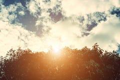 Alberi forestali Ambiti di provenienza di legno verdi di luce solare della natura Immagine Stock Libera da Diritti