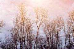 Alberi forestali Ambiti di provenienza di legno verdi di luce solare della natura Immagini Stock Libere da Diritti