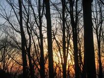 Alberi forestali contro alba Fotografia Stock