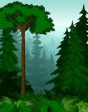 Alberi forestali del Canada di verde del terreno boscoso di vettore backlit Fotografia Stock