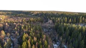 Alberi forestali della regione selvaggia nella vista soleggiata del paesaggio di giorno di molla fotografie stock