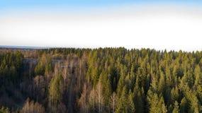Alberi forestali della regione selvaggia nella vista soleggiata del paesaggio di giorno di molla immagine stock
