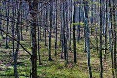 Alberi forestali densi in autunno fotografie stock