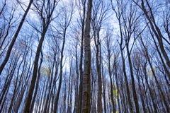 Alberi forestali densi in autunno immagini stock