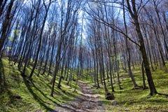 Alberi forestali densi in autunno fotografia stock