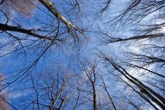 Alberi forestali densi in autunno immagine stock