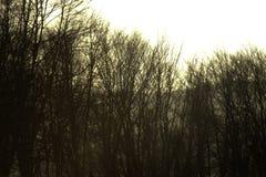 Alberi forestali densi dormienti Fotografia Stock Libera da Diritti
