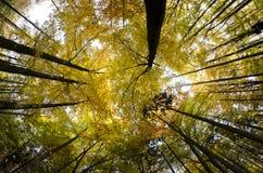 Alberi forestali di autunno fotografia stock libera da diritti