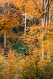 Alberi forestali di autunno immagini stock libere da diritti