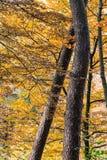 Alberi forestali di autunno fotografia stock