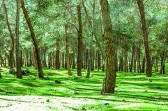 Alberi forestali di autunno Ambiti di provenienza di legno verdi di luce solare della natura Fotografie Stock