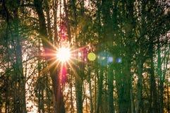 Alberi forestali di autunno Ambiti di provenienza di legno verdi di luce solare della natura Fotografie Stock Libere da Diritti