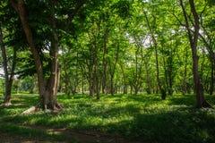 Alberi forestali di autunno legno verde della natura Fotografie Stock Libere da Diritti