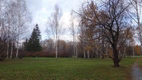 Alberi forestali di autunno senza foglie immagini stock