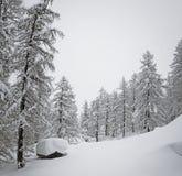 Alberi forestali e stagno di Snowy nelle alte alpi francesi Fotografia Stock