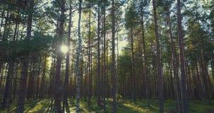 Alberi forestali legno dell'albero forestale della depressione di volo stock footage