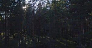 Alberi forestali legno dell'albero forestale della depressione di volo video d archivio