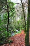 Alberi forestali lungo un riverbank Immagini Stock Libere da Diritti