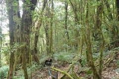 Alberi forestali naturali del sole della foresta verde Immagine Stock