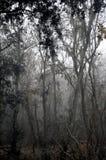 Alberi forestali nebbiosi Immagini Stock