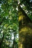 Alberi forestali r Immagine Stock