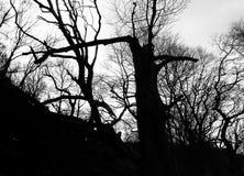 Alberi forestali scuri atmosferici di inverno in siluetta con i tronchi rotti ed i rami torti contro un cielo crepuscolare fotografie stock libere da diritti
