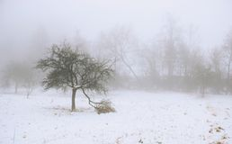Alberi in foschia Fotografia Stock