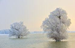 Alberi gelidi di inverno Fotografia Stock Libera da Diritti