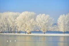 Alberi gelidi di inverno Fotografia Stock
