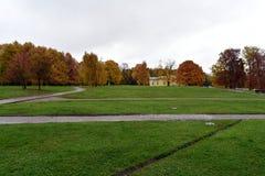 Alberi gialli delle foglie ed erba verde immagini stock