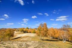 Alberi gialli in deserto con il fondo del cielo blu nella prateria di Mongolia Interna in Wulanbutong fotografie stock