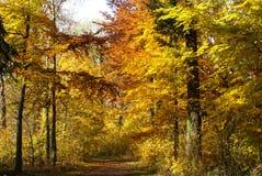 Alberi gialli di Birght in autunno immagini stock libere da diritti
