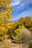 Alberi gialli di marrone del und sulla collina rocciosa, stagione di autunno Fotografia Stock Libera da Diritti