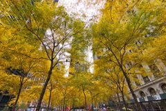 Alberi gialli Zuccotti Park fotografia stock