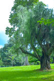 Alberi in giardini botanici reali, Kandy, Sir Lanka Fotografia Stock