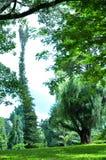 Alberi in giardini botanici reali, Kandy, Sir Lanka Fotografia Stock Libera da Diritti