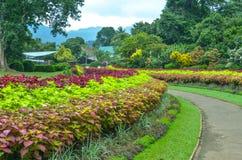Alberi in giardini botanici reali, Kandy, Sir Lanka Fotografie Stock