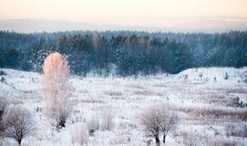 Alberi glassati sui precedenti della foresta blu immagine stock libera da diritti