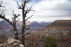 Alberi a Grand Canyon Fotografia Stock